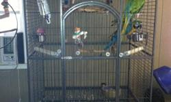 I HAVE A MILITARY MACAW HIS NAME IS ROSCOE AND I HAVE A BLUE AND GOLD MACAW HIS NAME IS JOLIE. THEY ARE FRIENDLY WHEN THEY GET TO KNOW YOU. THEY WILL SAY HELLO CRACKER AND I LOVE YOU. THEY ARE CAGED TOGETHER AND ARE IN A VERY LARGE CAGE. I AM MOVING OUT