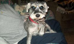 1 salt & Pepper 3 year old male Mini Schnauzer with papers ACA house broken all shoots very friendly very good with kids $200.00 or best offer. Please 336-725-8348