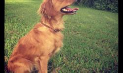We have a mini retriever that needs a forever home. Her name is Bella she weighs 27lb and is 2 years old. She is up to date on her shots and has insurance till 8/13. She's a really smart dog, well trained and she is such a sweet heart. Loves