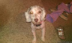I have a 1 1/2 old female miniature poodle for sale. She is housebroken, up-to-date on shots, kennel and leash trained, good with other animals and children. She would make a good Christmas present.