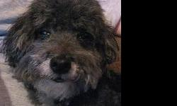 Teddy and Lucky are 10 yr. old Miniature Toy Poodles that are brothers. They have very sweet dispositions, rarely bark, and love attention. They are both neutered and are current on their shots. We prefer that they be placed together. Their owner recently
