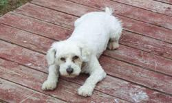 Zach is a medium size white Bichon frise with a blue collar and Arizona tags, he was lost around Oct. 20 and was last seen in the Damonte ranch area Reno Nevada.