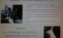 Help us bring our Ace home
