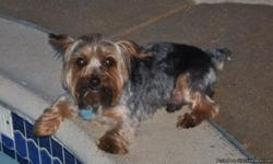Missing male yorkie, named Baxter. He was wearing a small black collar with two tags. Last seen at 121 Mabry Ln. in Red Oak. He disappeared 10/13/10 and haven't seen him since. This is my 4 year old daughter's dog and she will be devastated if he's not
