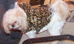 Our small Shih Tzu went missing Thanksgiving Day. Her name is Cuddles, she 10 years old, has blonde hair. Last seen in our front yard onWooten Road in Beaumont Tx. My email address is nana.chery_2012 @ aol.com. Our phone number is --