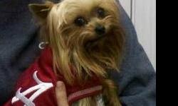 My baby went missing today. She is a yorkie named Molly Kate. She is sweet. She has a chip so if you bring her to a vet they can microchip her. She does not have a collar on. If you find her please call.