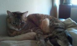 Free to good adult home a five year old female tabby has been spayed. Need a home as soon as possible. 479-285-0540