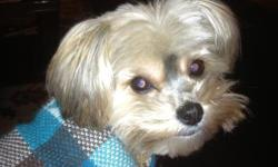 2 1/2 yr old morkie. Sweet little dog. Loves a lot of attention. Great with adults and children.