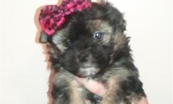 a beautiful, playful and very small Maltese/Yorkie female puppy available now. In the process of crate training and she's doing great! asking $400 ....call quick... our last litter disappeared fast! Please call Shayne at 678-414-2289.