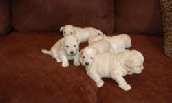"""I have one Female Multipoo Puppy for sale. Multipoos are NON shed, full grown will be 10 to 12 pounds. Multipoos are great """"lap"""" dogs and are very loving. Call: 561-688-3411 Start the New Year off with a New Best Friend..............."""