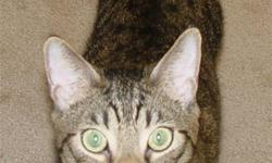 Looking for a loving home for our 2 affectionate adult Maine Coon/Abyssinian cats...My elderly Mom needs immediate homecare and is highly allergic, so please call A.S.A.P. if you can help us, or need more info. 909-985-3736