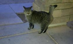 She is a great 7 year old cat her name is cutie pie because she is very cute She is spayed, gets along well with all other animals. and is good with kids very independent.