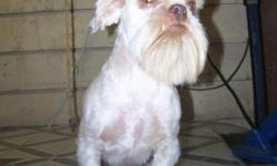 I am a certified Dog Groomer looking to expand my Clients list. I have four dogs of my own and concider them to be my babies. So I understand and will do my best to give your dog the style that you choose for them. I do regular hair styles like for little