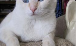 my white male cat needs plenty of love ,,,,and my blk lab mix shepard also shes older stuie is my cat hes about 4 but very affectionate and loving you can contact me at -- or email me at debbie_bena@yahoo.comi moved to a apartment and cant have pets