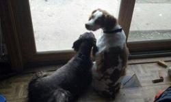 Have your dog stay with us while you are at the coast or get them groomed while you are eating at the Casino. Check us out at BriannasCanineResort.com or Call -- Pickup and Delivery available