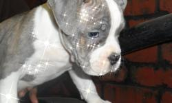 Olde English bulldogges 10 weeks looking for loving family, very stocky, bully and free whelpers and breeders. Dad is out of Cali. 1300.00 or best offer. Happy Holiday these guy will brighten up your family!!!