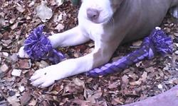 I have 2 females and 1 male left. They are 3 and a half months old. They have had 3 sets of shots and they have been dewormed. They are friendly, playful pups. They are getting big and need their permenent homes. They were born Aug. 17,2010. So if your