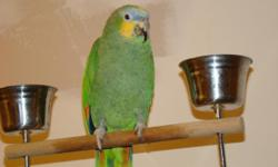 i have an orange winged amazon parrot for sale. tame and friendly but preferrs men over women. Does not like children thou. ok around kids he just dont want them handling him. very healthy no issues. comes with perch and 2 cages with lots of toys.