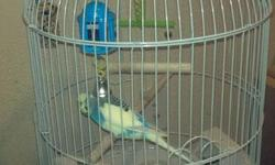 Hugger 1 year old Parakeet needs a new home and includes cage, toys and food. Asking $ 75 This bird need good new home with a little tender loving care and little training. First come. . . first serve. . .. Serious Inquiries Only 702-443-2295