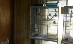 i have 10 parakeets with a big cage for sale. Cage has 2 small doors, easy access to get into. Bottom of the cage rolls, as well as it has a removable tray for easier cleaning. I put newspaper down so that all I have to do is remove the newspaper. I had