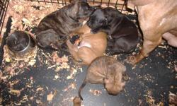 2 male pit bull puppies left. to good homes only. for personal pets. no micheal vicks please