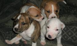 5 week old pit bull puppies need to find new loving homes... 4 females and 1 male left asking $100 feel free to call or text me at 602-465-6282 anytime for any questions you may have or to come and see them... very happy and healthy puppies that are fully