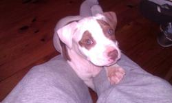 All white with light brown spots and hazel eyes. Some spots in the shape of hearts. Born on Feb. 1st, 2011. Asking 150/obo.