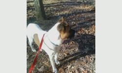 My name is Big Boi and I was walking at Craighead with my Mom Thursday. I got excited and got out of my collar and leash and now I need help getting home. I know my Mom is worried sick. I am a 3 yr old boxer/akita mix. I have a brown head and mostly white