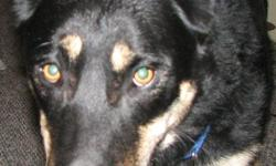 My name is Jake I am a black/tan shepherd wearing a blue collar I ran from my home in Friendly village Gorham Maine on May 28th I am a little shy around strangers but I don't bite please help me find my way home. Please contact my family if found at