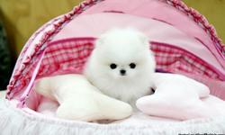 We have jut two Pomeranian puppies we are looking for a family that will be able to assure us that they can provide the kind of love and care we would have given to them for its a new job situation that has cause us to let them go and we are looking to