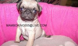 CUTE PUG, 1O WEEKS OLD READY FOR A NEW HOME, POTTY TRAINED, HOUSE BROKEN, GOOD WITH KIDS, HAS BEEN GIVEN THEIR FIRST SHOT AGAINTS PARVO, PARASITES AND BEEN DEWORMED MORE INF..AT 619-408-4214 (619) 408-4214