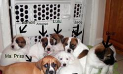 I have some beautiful puppies up for adoption, I have created the website below to answer all your questions, and for pictures of them. Please take a look and get back to me if you are interested. http://cutepuppies2011.webs.com/