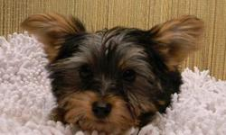 Registered Yorkies, Maltese, German Shepherds, Sheba Inu, Boxers, Lab, Poodles. Small mixes --Shorkies, Morkies, Yorkie Poo, Shih Poo and more. Prices starting at $250. Reasonable priced delivery available to your area.