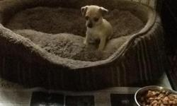 I have 1 boy puppy left 4 sale if your interested please get back to me ASAP thank you... hope to hear from you soon
