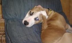 We have a energetic pit bull to rehome. He loves to cuddle, play fetch, and he will sit on command. We will not adopt out to people who are intending to use this dog for fighting. It's not happening. We what Prince to go to a loving home with a