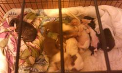 I have 7 girls 1 boy parents on premises they will be available January 17 taking deposits to hold now call