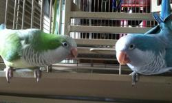 I will be relocating within a month... There is blue boy quaker with accessories and the other boy quaker is green with accessories.. They can't be housed together as these birds reguire their own.. But they enjoy flying around the house mingling