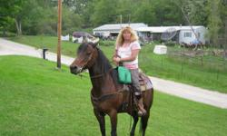 9 yr. old with papers, well broke, experienced rider prefered. road safe this mare has a lot of potential.she also loads well.