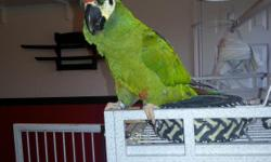 Our McCaw needs a great forever home. She is 2 years old, healthy, and has a great personality. She has been best buds with our caique and would especially love a friend. She comes with a large parrot cage. We would prefer someone who has had