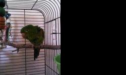 Rare white-eyed male conure, good natured, DNA sex, asking $300.00. Contact Diane at --.