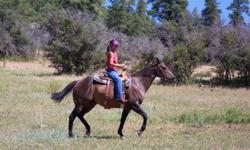 Easy Jet ~ Top Deck bloodlines Easy going, great ride, sweet disposition Great with farrier, clippers, loads ? Good All Around Horse. Great horse for pre-teen, teenage girl. Great bloodlines for breeding. $1000.00 to good home