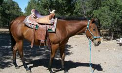 The horse is great for kids. Brown Eyes Crying (Miss. B) is a two year old filly, and is loveable. Miss. B would make a great companion. I have raised this filly from day two. All vaccines are up to date. Miss. B been wormed, and farrier work is current.