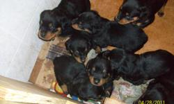 Registered German Rottweiler puppies,born 3/28/2011. 4 Females and 6 Males. They are eating on their own,and ready to go to new homes. Shots are up to date. These puppies are out of BARON_VON-DER-ADALARD-RA' AND SANDY SHATZIE VOM SEGAN. MALES