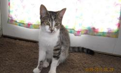 I have several cats that I rescued from the flood that need loving homes. They are litter trained and very sweet.