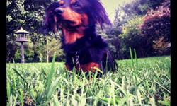 We lost our dog near hiwassee hill dr. Near milligan hes brown and black long haired not nuetured hes a wiener dog weighs about 18 pounds please call or txt any time --