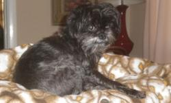 """9 year old female Affenpincher. Black with white in her beard. Weighs about 12 lbs. Sweet personality - very friendly and lovable. Answers to """"Charlie"""". Lost in the Bailey Cove Estates area, 35802. Her family REALLY misses her and wants her to come home!"""