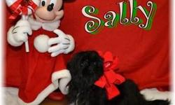 A Sally Female Shihtzu Sally is a precious white andblack female Shih Tzu, born on July 12th,2012. Her youthful and cuddly appearance will make your heart melt!Sallywill make a great companion to any family situation. She does not