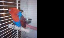 my wonderful birbie needs a loving home ive lowered my price only because she is alone all day til3pm she needs more than that.she is 5 perfect for breeding, very loving pet loves men soon as she ses my boyfriend she makes a nest help me to find a great