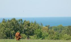 QH - APHA and Tennessee Walkers for lease. Always wanted a horse but no room or would like to lease for a summer. Our horses are available from May 1 to November 1. 200.00 to keep them on the ranch and 150.00 per month to take them off site. Go to our