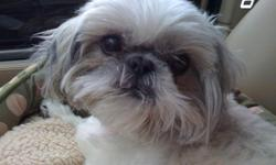 6 year old Shih-tzu is in need of a loving home. He prefers to be in a home with no small children. He is adorable, loving, funny. He has been a very important part of our home for 6 years and we are very upset to have to find a home for Snowball. If you
